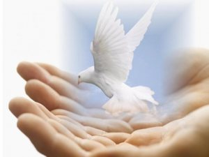 Bird in the hands brings peace
